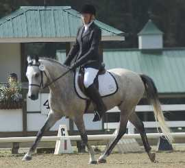 Zoot, Intro B National Dressage Pony Cup June 2008