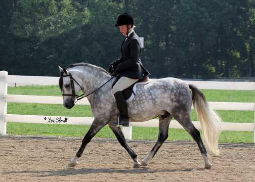 Gayfields Silver Sprocket under saddle with Missy Bedwell, Heartland show 2006