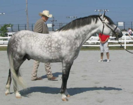 Sprocket in Open Halter, June 2007